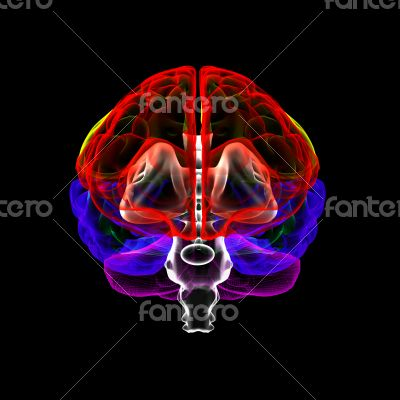 Human brain in x-ray - front view