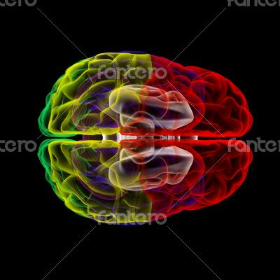 Human brain in x-ray - top view