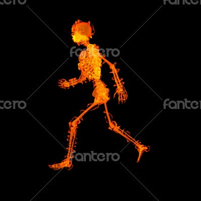 walking  skeleton by X-rays in red