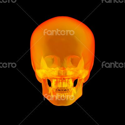 Isolated human x ray skull on black background