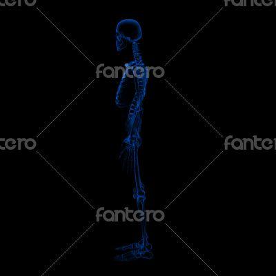 3d rendered Skeleton on a black background