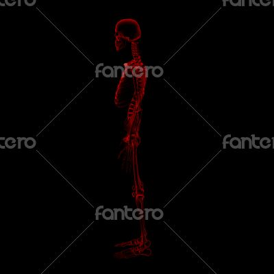 3d rendered Skeleton on a black background