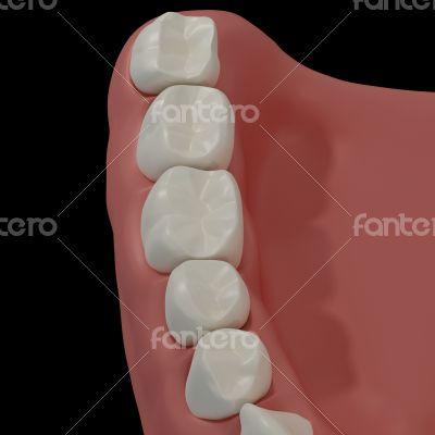 3D teeth on black background