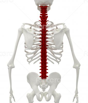 Skeleton of the man with the backache.