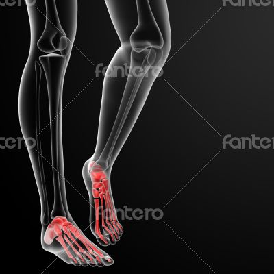 3d rendered illustration of the female foot bone