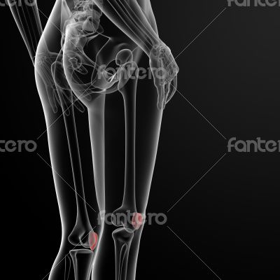 patella bone