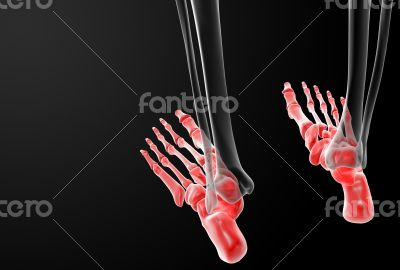 3d render human foot x-ray