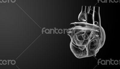 3d render Heart  - side view