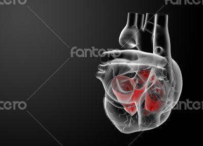 3d render Heart atrium