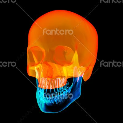Human Skull. Upper half. with black background