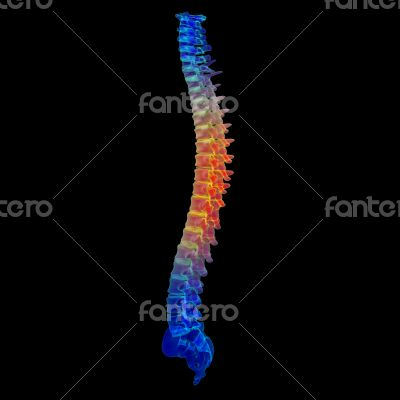 3d render painful spine