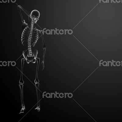 3d render Skeleton X-rays - back view