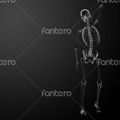 3d render Skeleton X-rays