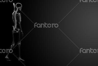 3d render Skeleton X-rays - side view