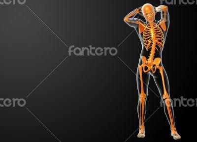 3d rendered orang skeleton