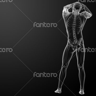 3d rendered skeleton