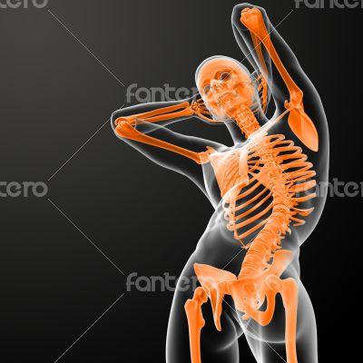 3d rendered skeleton