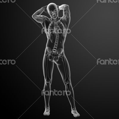 Human in x-ray view