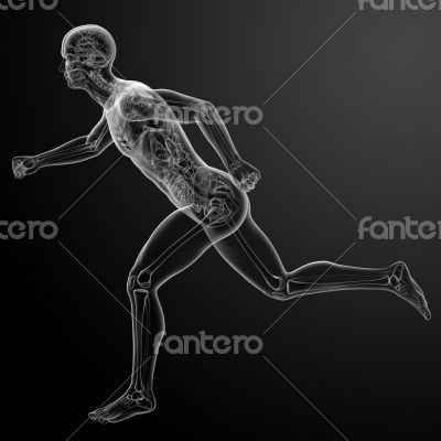 Running human anatomy by X-rays