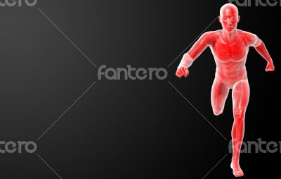 Running human anatomy by X-rays in red