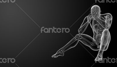 3d render Human anatomy - front view