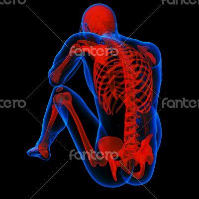 3d render illustration of the Skeleton