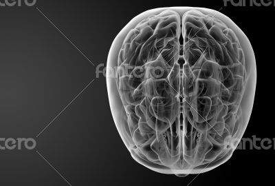 3d render skull on black background