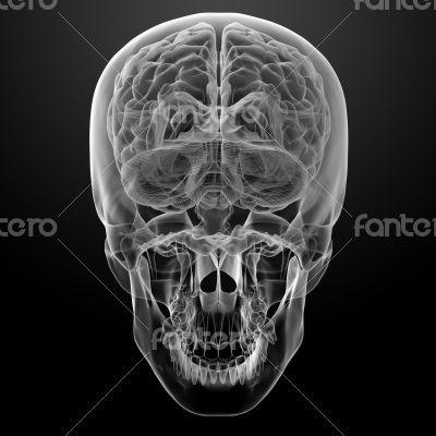 Human brain X ray