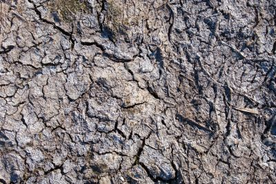 Dried-up mud surface