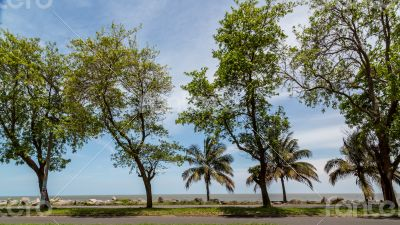 Trees by the shores of Maputo Bay