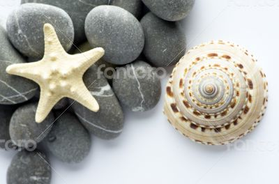 Natural spa elements- seashell with starshell and stones on whit