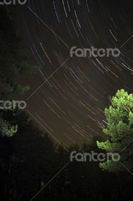 The star sky at winter night in wood. Movement of stars