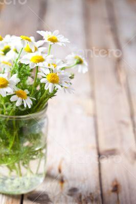 chamomile bouquet in jar
