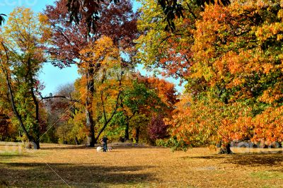 Autum colors in Central Park
