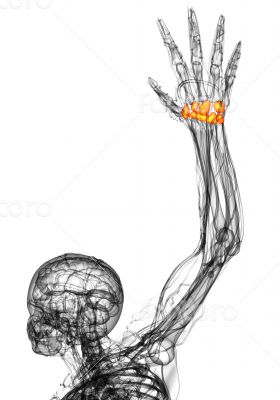 3d render medical illustration of the carpal bone