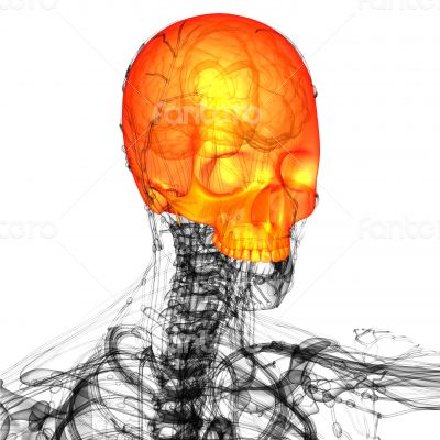 3d render medical illustration of the upper skull