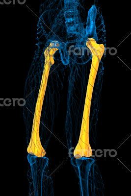 3d render medical illustration of the femur bone