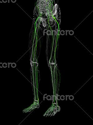 3d render medical illustration of the nerve system