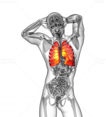 3d render illustration of the human lung