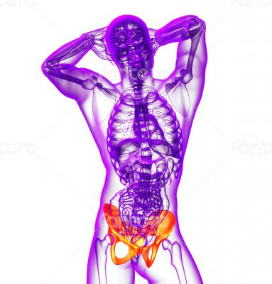 3d render medical illustration of the hip