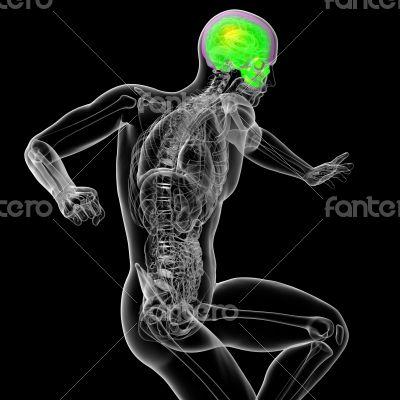 3d render medical illustration of the human sull