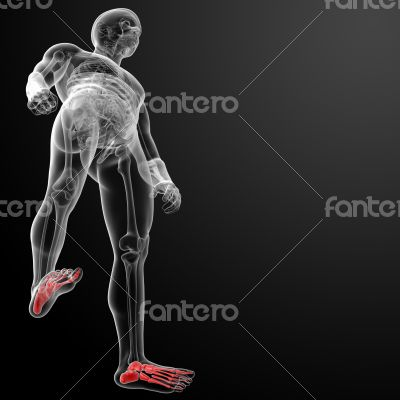 3d render x-ray of foot