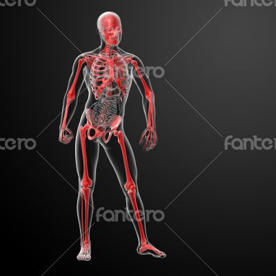 3d render skeleton by X-rays in red