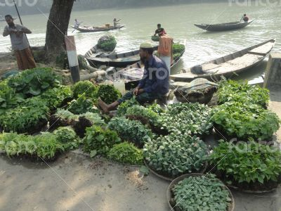 Vagetables plants seller