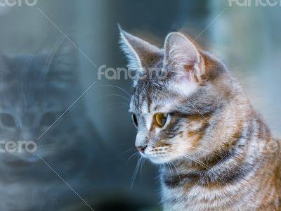 Gray kitten near the window