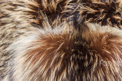 Texture of a product from fur of a fox