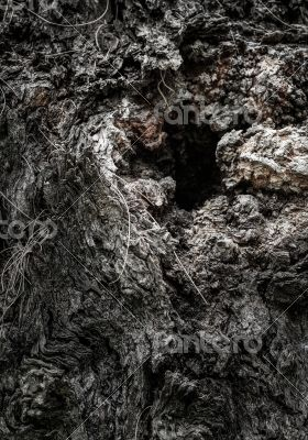 Deep Hole in a Tree