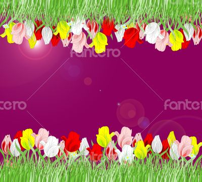 Beautiful background of red, yellow, pink tulips