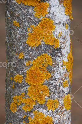 old bark surface background