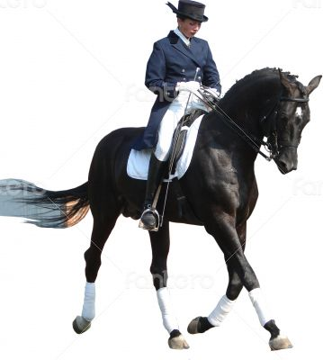 equestrian lady riding black stallion horse